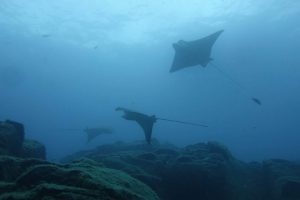 Diving Abades Beach in Tenerife with Excel Scuba